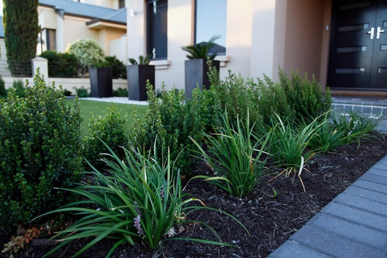 Landscaping Instagardens Landsdale Stirling Home Gardens